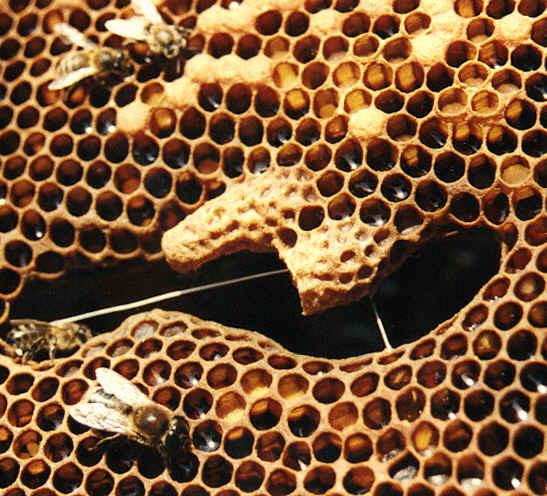 Source : L'arbre aux abeilles