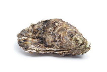 Que faire des coquilles de mollusques ? Action Zéro Déchet
