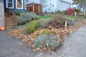 leaf litter left as shelter