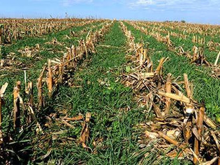 Adopting Cover Crops on Your Farm