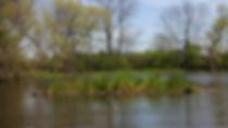 Floating treatment wetland