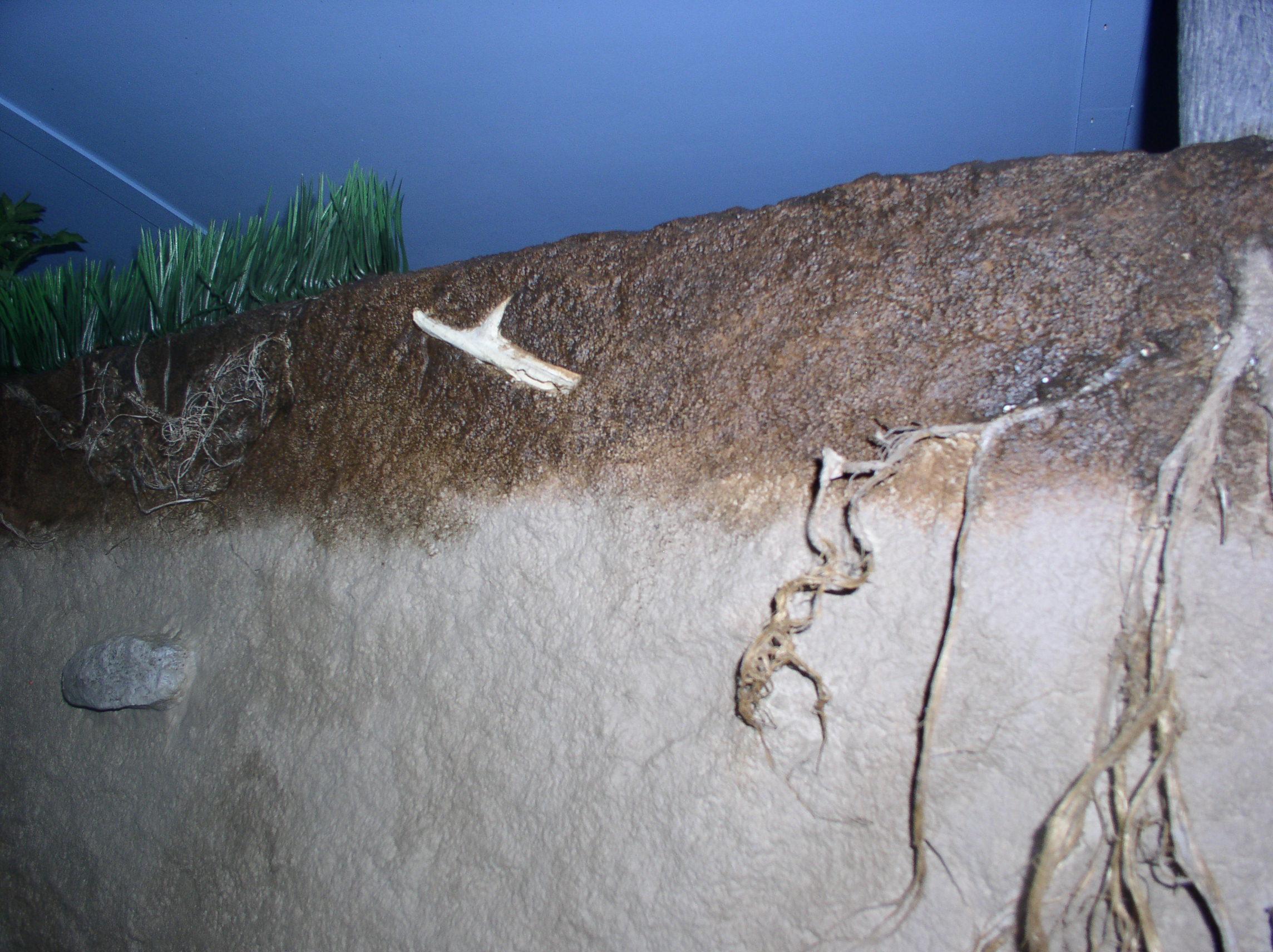 Bones and roots