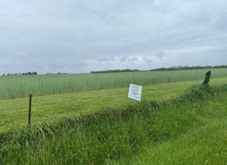 Water Management Using Cover Crops