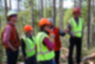 Consulting Forester Group