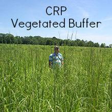 CRP vegetated buffer