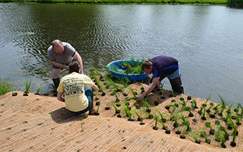Planting a floating wetland