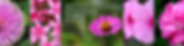 banner1 (1).png