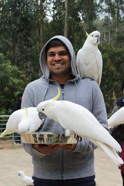 Feeding Cockatoos