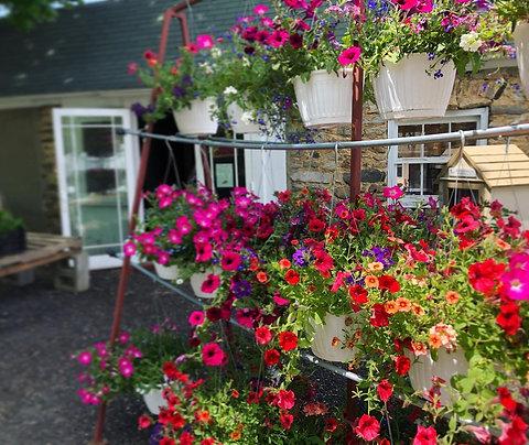 2021 Hanging Flower Basket