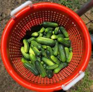 picklers.jpg