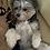 Thumbnail: Dog Tag: Dalmatian dots
