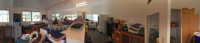 Interior Panorama Miss U Motel for Moggies Cattery Canberra