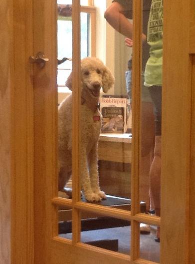 Pup in exam room.jpg