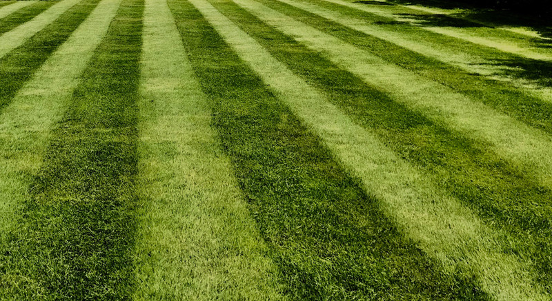 Lawn Installation and Care