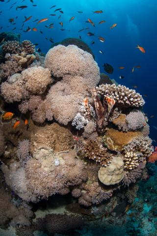 Sharm  Mar Rosso