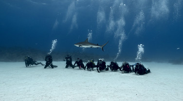 Tiger beach  Shark's Paradise