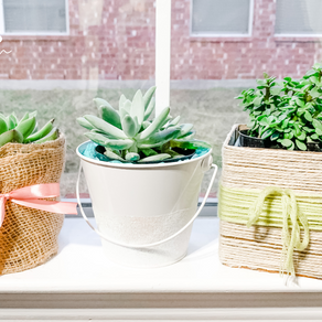 How to Gift Wrap Succulents: 3 Easy Ways to Turn Mini Succulents into a Gift