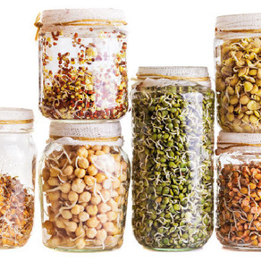 How to Grow Sprouts Indoors: Easiest Sprouts to Grow at Home