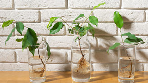 4 Houseplants You Can Grow in Water