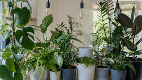How To Keep Houseplants Alive In Winter
