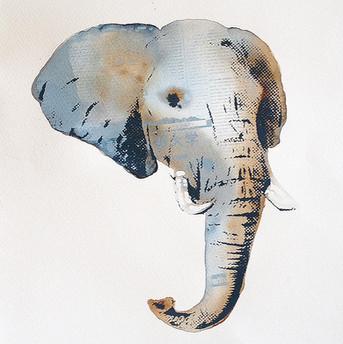 Water for Elephants 1D