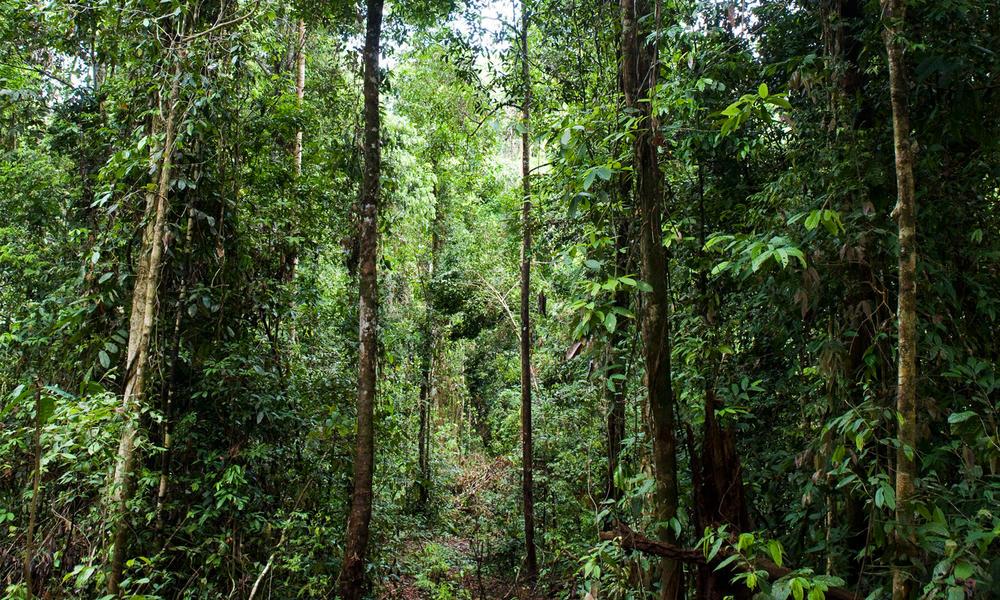 East Kalimantan 3