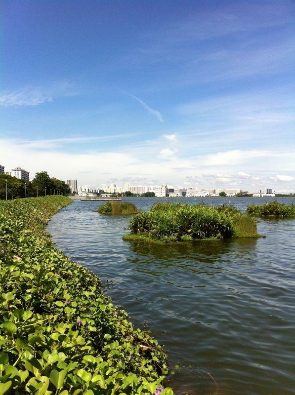 Pandan Reservoir Floating Wetland