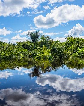 Mirror Forest Iquitos, Peru.jpg