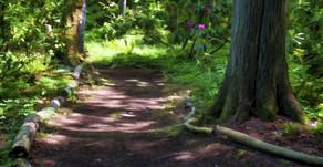 Trilha no mato e liderança: qual a relação?