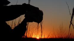 Ash scattering at dawn, Kansas, USA