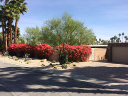 Palm Springs Front Yard
