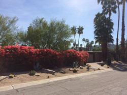 Palm Springs Mid-Century Front Yard