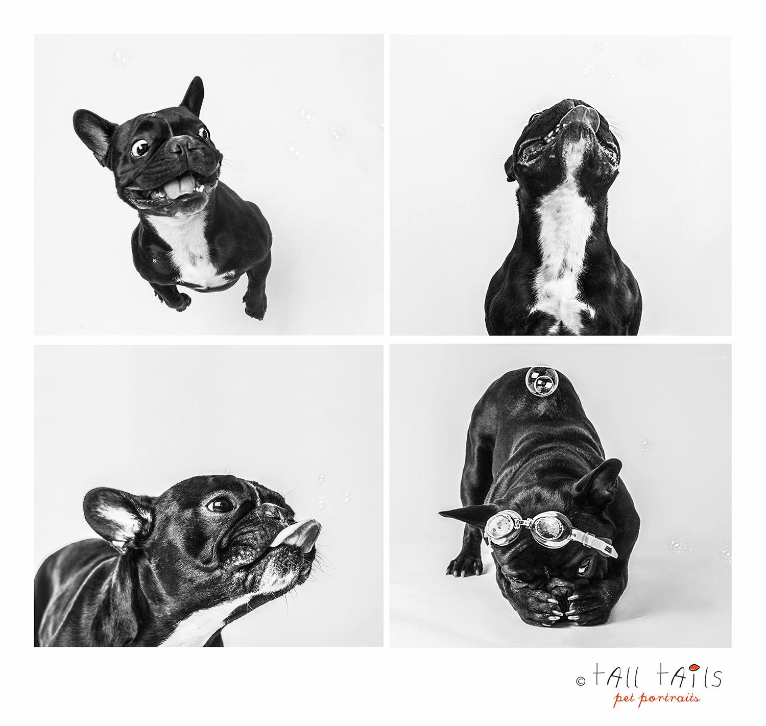 4 french bulldogsfb.png