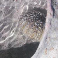 Balmoral (Rose Cycladic)