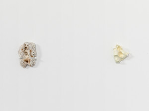 TS015 (HVY SM tooth), TS009 (Yellow Palm); Installation view
