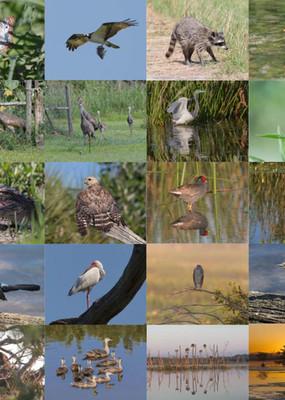 Orlando Wetlands Park Educational Center
