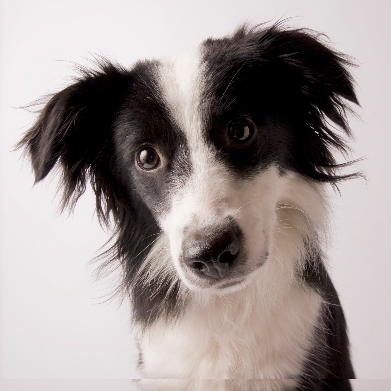 Quick Drop-in Dog Visit