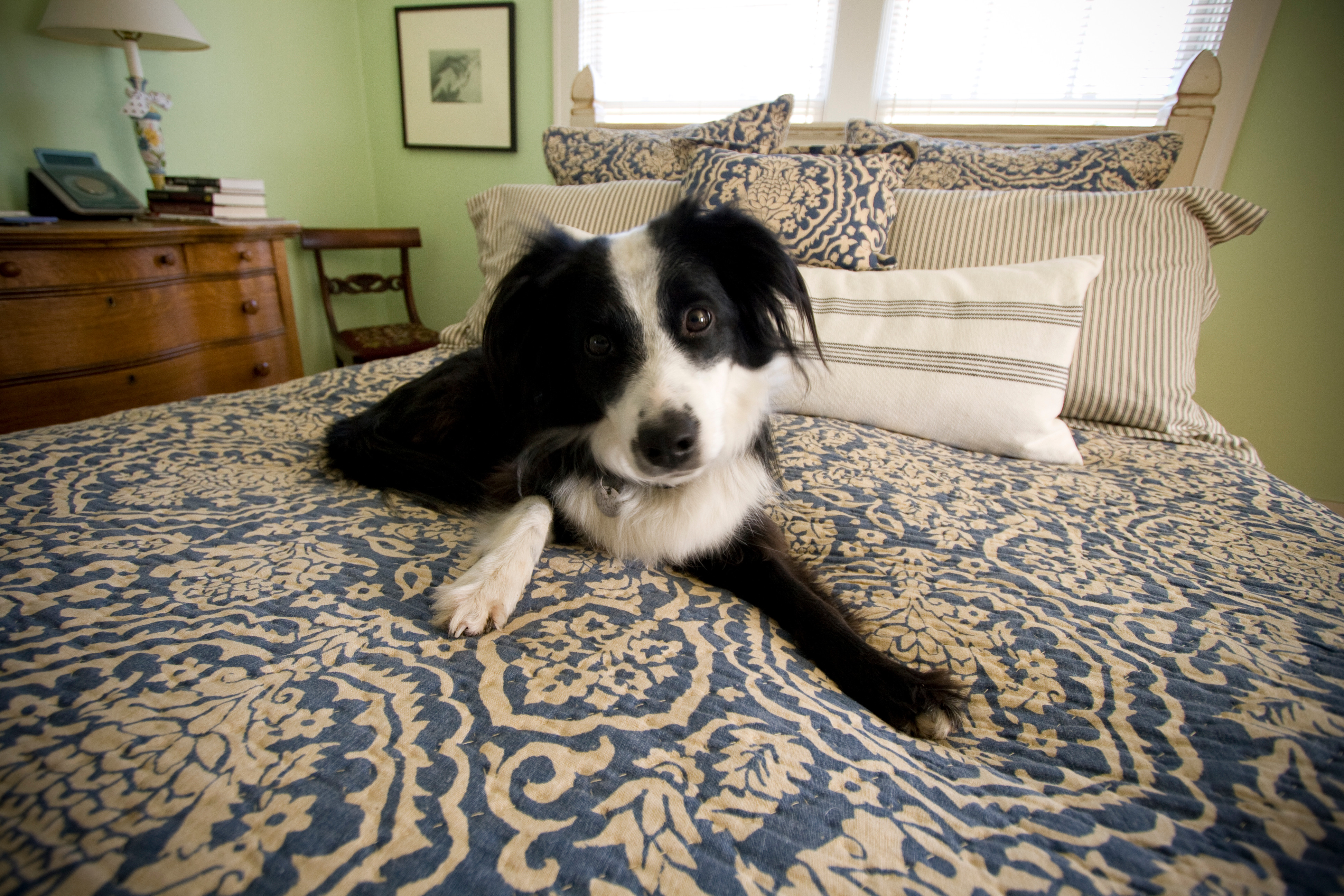 Drop-in Dog Visit