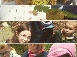 Chasse aux trésors d'automne pour les classes maternelles avec l'aide d'élèves de P3 et P4.