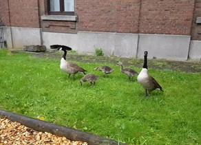 Des visiteurs inattendus ce matin à l'école du Quartier !