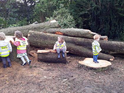 Exploring the cut down tree