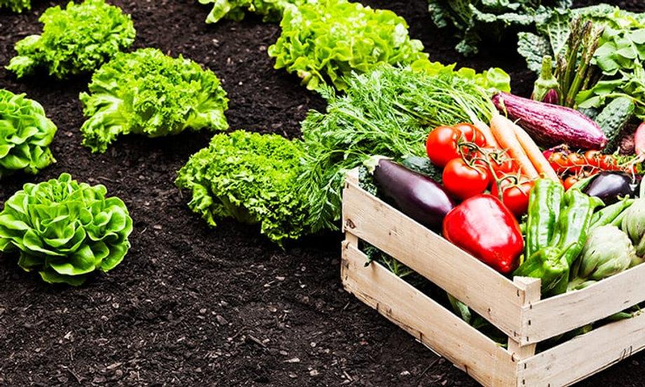 021619-gs-mobile-vegetables.jpg