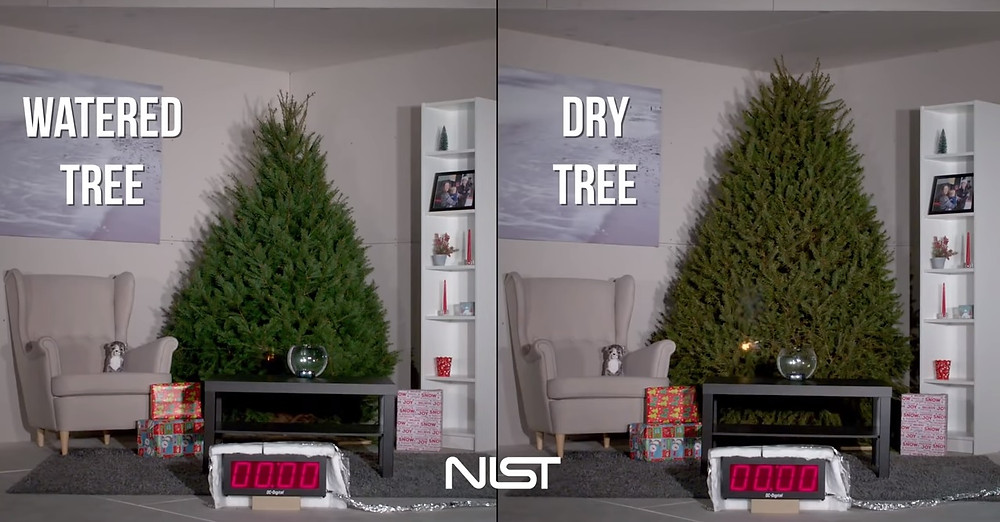 2 Trees, one moist and one dry Christmas trees