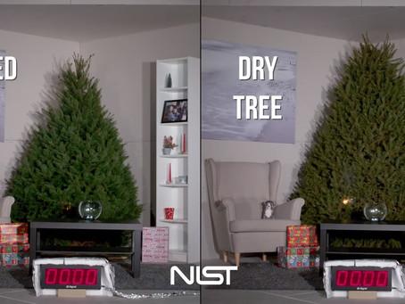 The Christmas tree and saving electricity this Christmas