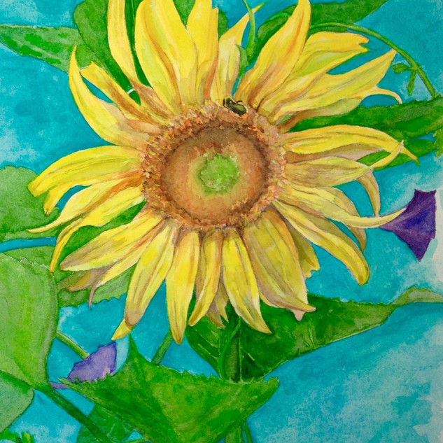 Sunflower and Morning Glory
