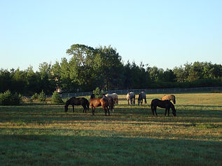 pasture with horses ad pic 7 small sized