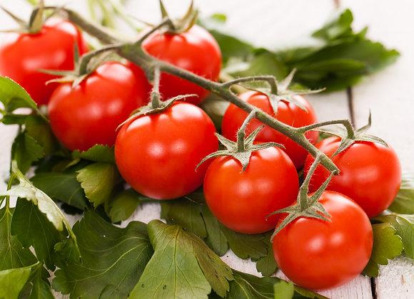 Tomate Cerise Supersweet en Godet