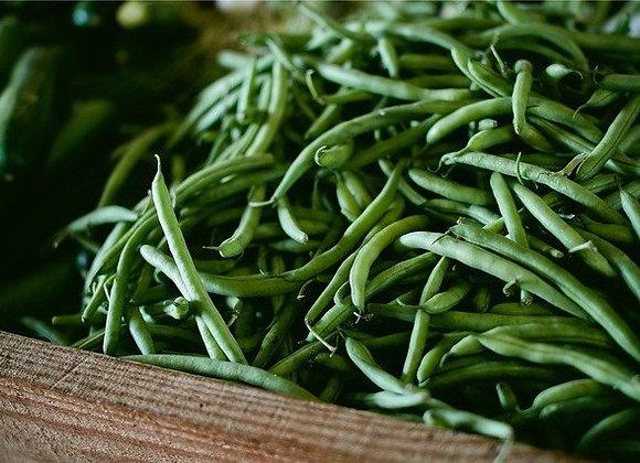 Haricot Nain Rugally Graines Bio