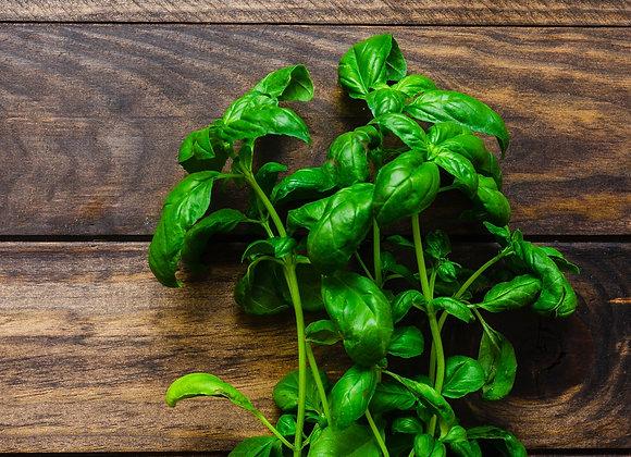 Basilic Grand Vert Graines Bio