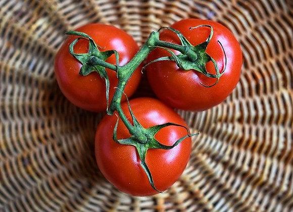Tomate St Pierre Graines Bio